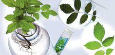 Отказ от потенциально опасных компонентов Мы исключили из состава вредные продукты нефтехимии, парабены, тиазолиноны, феноксиэтанол и традиционные компоненты и заменили их на компоненты растительного происхождения.
