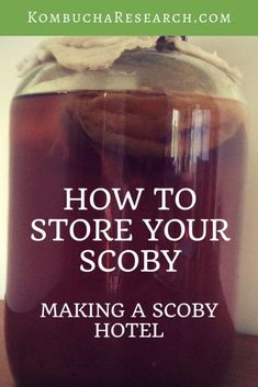 Want to keep your scoby for later? All about how to take a break from kombucha. How to store your scoby. Make a scoby hotel. Keep it on the bench or in the fridge. Kombucha Tee, How To Brew Kombucha, Making Kombucha, Kombucha Drink, Kombucha Brewing, Organic Kombucha, Probiotic Foods, Fermented Foods, Scoby Hotel