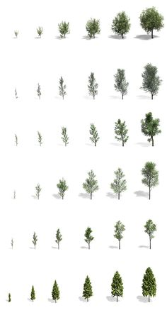 Reverse Engineering the Morphogenesis of Polygonal Tree Models - Modern Design Collage Architecture, Architecture Concept Drawings, Architecture Graphics, Architecture Visualization, Landscape Architecture Drawing, Landscape Drawings, Landscape Design, Tree Photoshop, Tree Sketches