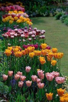 Spring tulips in the sunken garden, Chenies Manor Garden, Buckinghamshire, England Tulips Garden, Garden Plants, Planting Flowers, Gardening Vegetables, Manor Garden, Dream Garden, Flower Beds, My Flower, Sunken Garden
