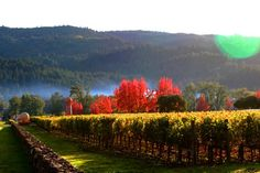 Sterling Vineyard, St. Helena  Fall 2002  Gorgeous property and wine became a favorite