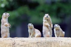 Prairie Dog Convention at York Wild Animal Kingdom.