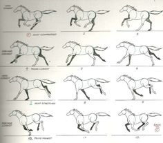Weeks 1 and 2 – Quadruped – Walk and Run Cycle – Advanced Animation Skills Horse Drawings, Animal Drawings, Horse Running Drawing, Running Horses, Horse Drawing Tutorial, Horse Animation, Run Cycle, Horse Anatomy, Animal Anatomy