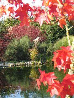 Acers -voorgrond- hebben (boom en struiken) een mooie herfstkleur.