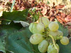 Imádkozó sáska 014. Fruit, Nature, Food, Naturaleza, Meal, The Fruit, Eten, Meals, Natural