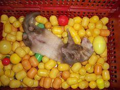 Spielzeug selbst gemacht    - Grazer Frettchenverein - We care about ferrets