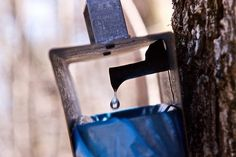 Ahhh sweet maple syrup. Tap 2 Maple Trees with this modern tapping kit. Makes it fun and easy to collect all the sap you need from your own back yard.