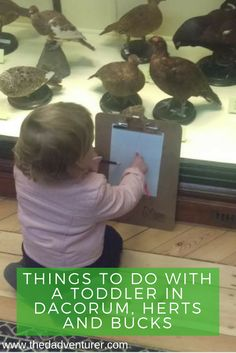 Struggle to find things to do in Dacorum, Hertfordshire or Buckinghamshire with a toddler? Well here's a load of activities we do and places we go in the local area for day trips. Click through to read about the places I go with my kid in Dacorum, Herts and Bucks, including places like Whipsnade Zoo, Tring Natural History Museum and Dunstable Downs.