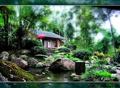 Tropical Japanese #Garden.