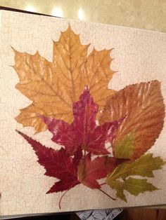 """Pressed leaf art. Gathered fall leaves, pressed them, applied mod podge to them, and arranged them into a collection. This photo is a page in an album called """"Autumn Leaves,"""" which was inspired by my Great Aunt Billie who had never seen fall in the Midwest."""