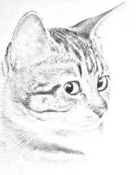 """Résultat de recherche d'images pour """"dessiner un chat"""""""
