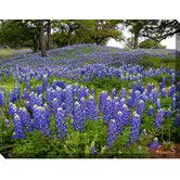 Found it at Wayfair - Hillside Bluebonnets Photographic Print on Wrapped Canvas