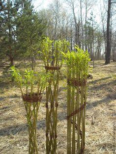 """Купить Живая ваза """"пизанская башня"""" - зеленый, живые цветы, живые растения, ваза"""