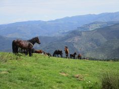 https://flic.kr/p/ERLywU | Caballos salvajes en la ladera sur del monte Aballarri.