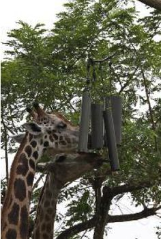 wild animal enrichment images | 1st Southeast Asian Animal Enrichment and Training Workshop | Wildlife ...