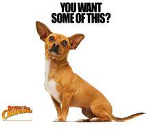 Beverly Hills Chihuahua  LOVE LOVE LOVE this movie