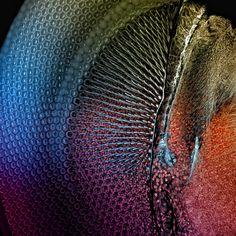 Extraordinary Microscope Photographs - Photos - The Big Picture - Boston.com