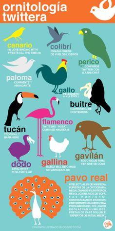 Ornitología Twitera: te reconoces en esta #infografia #twitter