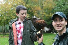 Hawk Walk at Ireland's School of Falconry at Ashford Castle, Cong, Co. Mayo | A Private One Hour Hawk Walk