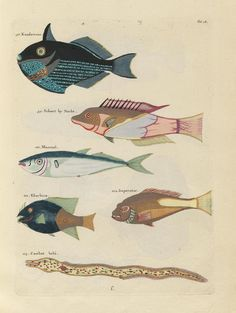 Images from the First Colour Publication on Fish (1754) | The Public Domain Review