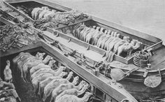 Camels from Egypt en route to Gallipoli