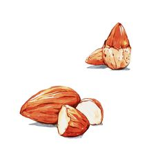 Find Almonds Watercolor Painting stock images in HD and millions of other royalty-free stock photos, illustrations and vectors in the Shutterstock collection. Thousands of new, high-quality pictures added every day. Hu Chocolate, Coffee Chalkboard, Watercolor Food, Rooster, Food Photography, Draw, Painting, Animals, Almond