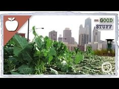 Urban Farming Key in Fight Against Hunger and Climate Change