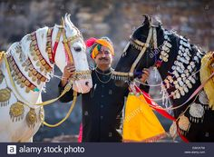 Marwari Horse - Google Search