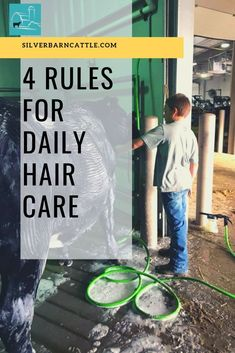 Four Rules for Daily Hair Care Silver Barn Cattle # Hair Care Oil, Diy Hair Care, Show Steers, Hair Buildup, Natural Hair Conditioner, Showing Livestock, Showing Cattle, Steps To Success, Hair Protein