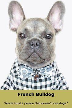 French Bulldogs Frenchbulldogpuppy Frenchbulldogshirt French