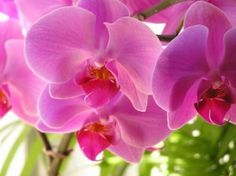 The top 10 most popular types of orchids.