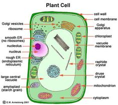 Cell Model Shoebox How To Make A 3d Plant Out Of Household Items