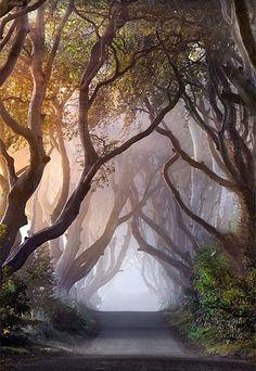 [Las Coberturas Oscuras en otoño - Irlanda del Norte] » Autumn Hedges - Northern Ireland