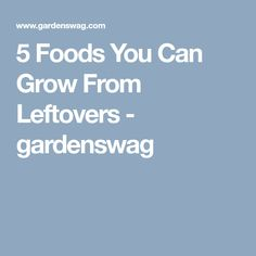 5 Foods You Can Grow From Leftovers - gardenswag Leftovers Recipes, Cheap Web Hosting, Going Crazy, Good To Know, Helpful Hints, Canning, Foods, Tips, Blog