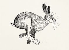 Out of the Garden (hare) - woodcut - Graham Blair, Canada Fox And Rabbit, Jack Rabbit, Rabbit Art, Rabbit Tattoos, Ink Art, Graphic Illustration, Printmaking, Sketches, Drawings