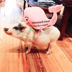 this little piggy went to the market, the vineyard vines market.