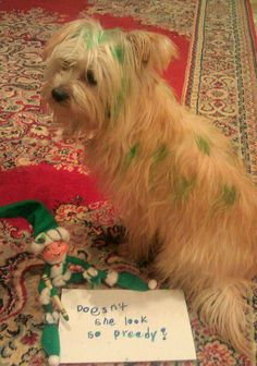 Elf on a shelf: Making pet beautiful