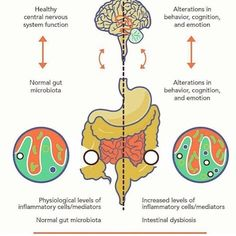 THE MIND/GUT CONNECTION   If youve ever gone with your gut to make a decision or…