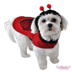 Anit Accessories Ladybug Dog Costume