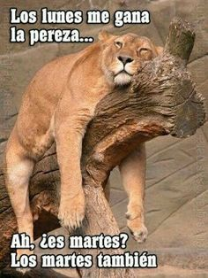 Make sleeping lion memes or upload your own images to make custom memes Funny Sunday Memes, Hump Day Humor, Funny Memes, Hilarious, Funny Sayings, Funny Good Morning Memes, Weekend Humor, Funny Friday, Memes Humor