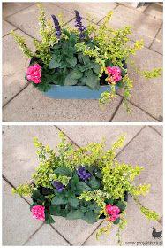kwiaty dla leniwych Window Box Flowers, Flower Boxes, Balcony Plants, Perfect Plants, Dream Garden, Outdoor, Gardening, Plants
