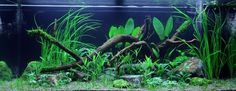 Layout 61 - Tropica - Tropica Aquarium Plants