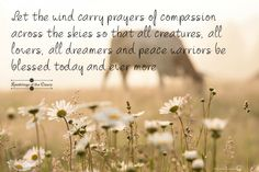 """""""Let the wind carry prayers of compassion across the skies..... """""""