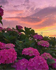 Foto Amazing Sunsets, Amazing Nature, Yellow Flowers, Colorful Flowers, Amazing Flowers, Beautiful Flowers, Beautiful Nature Wallpaper, Flower Images, Growing Flowers