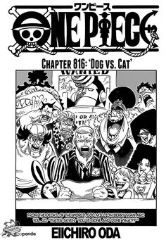 shintigercurl reads one piece, chapter 816: DOG VS. CAT