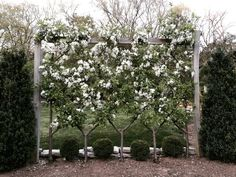 Vertical Rose Gardening Trellis - rose arches and other flower supports are visual highlights in the garden Garden Design, Plants, Landscape Design, Fruit Trees, Espalier Fruit Trees, Urban Garden, Dream Garden, Garden Design Plans, Garden Planning