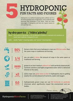 Hydroponics facts and figures - great stuff and why we should all think about this method of gardening