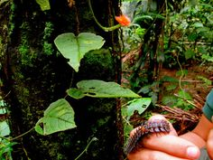 In the rainforest Nature Reserve, Ecology, Hiking Boots, Sustainable Development, Hiking Shoes, Environmental Science