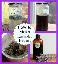 How to Make Lavender Extract - The Coconut Mama