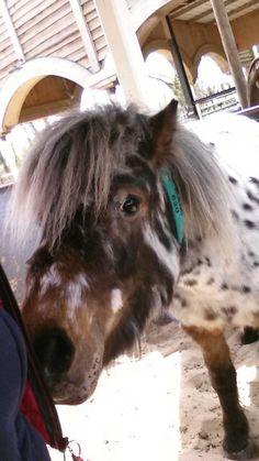 Cato #ponyparkcity #ppc | Ponyparkcity